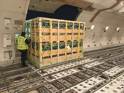 Pigs in cargo of an airplane